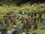 Statues of Jizo  a Japanese Divinity Seen as a Guardian of Children