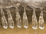 Close-up of Icicles Hanging from an Ice Layer on Top of a Rock