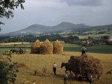 Men Harvest Oats Below Eildon Hills