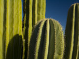 Close-up of Cacti  Santa Catalina Island  Loreto Bay National Park  Mexico