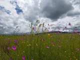 Windswept Field of Wildflowers