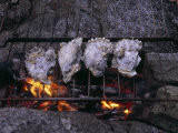 Oysters Roasting on a Grate over a Campfire