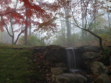 Japanese Maple Garden and Waterfall in Morning Fog