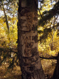Graffiti and Proclamations of Love Scar a Tree Trunk