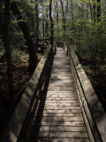Wooden Walkway Through Scenic Forest in Beartown State Park