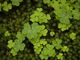 Garden of Moss and Clover at Natadera Temple