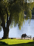 Couple Sitting on a Picnic Table under a Willow Tree