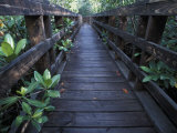 Walkway at a Nature Refuge on Vieques Island  Puerto Rico
