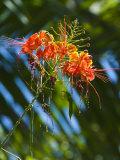 Beautiful Tropical Flower in Bloom