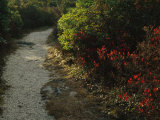 Gravel Path Through Shrubs and Low Vegetation