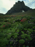 Thick Lush Mosses and Wildflowers Near Rock Formation