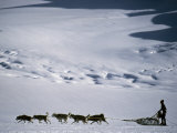 Dogsledder Travels across the Snow on Ruth Glacier