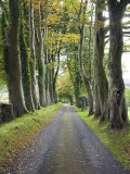 Tree-Lined Country Road to the 17th Century Castle Monea