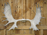 Antlers Hang at Katishna Roadhouse in Katishna  Alaska