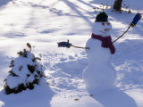 Dressed Up Snowman Next to a Snow Covered Colorado Blue Spruce