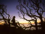 Woman Sitting on Tangled Tree Branches at Dusk