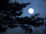 Moonrise over Matsushima's Pine Clad Islands