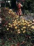 Woman Looks at Flowers Bordering the Sidewalk