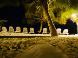 Chairs Lined Up on a Beach  and Palm Trees at Night