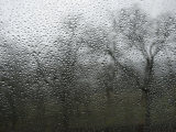 View of Trees Through a Wet Window with Water Droplets