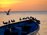 Birds Standing on the Bow of a Wooden Boat at Sunset