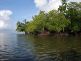 Mangroves a the Edge of a Small Island in the Celebes Sea
