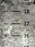 Close View of a Chemical in a Glass Beaker with Measurements