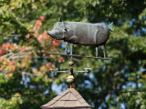 Pig Weather Vane Atop a Cupola with Backdrop of Trees in Autumn Hues
