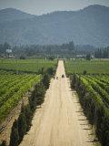 Casa Blanca Valley  Wine Growing Region West of Santiago  Chile
