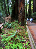 Hikers on a Trail in Muir Woods National Monument  California