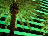 Green Hued Palm Tree on the Las Vegas Strip Is Lit Up at Night