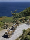 Mules Pull Carts Laden with Produce on Coastal Road Overlooking Ocean