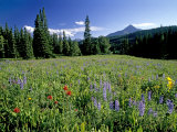 Meadow of Wildflowers Below Lone Mountain