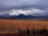 Colorful Tundra under a Brooding Sky in Denali National Park