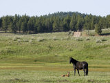 Mare and Her Foal in the Tusas Mountains in Carson National Forest