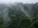 Fog Rises from the Treetops in Peru's Rain Forest