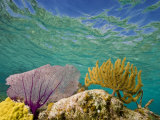 Underwater View of a Coral Reef in Belize