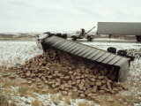 High Winds Put a Tractor Trailer on its Side Where it Spilled its Load