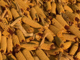 Close-up of a Mound of Ears of Corn Harvested for Livestock Feed