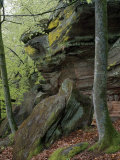 Beech Trees Growing Amid Eroded Sandstone Boulders in a Forest