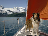 Collie Stands on the Bow of a Sailboat Near Snowy Mountains