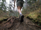 Ground View of a Person&#39;s Legs  Hiking in the Woods
