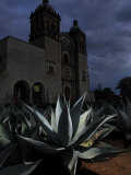 Agave Plant and the Church of Santo Domingo at Night