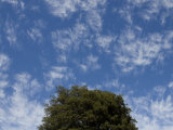 Cloud Formations and the Crown of a Tree
