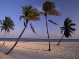 Empty Beach with Palm Trees in Key West