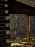 Empty Log Cabin in Golden Sunlight