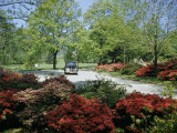 Car Travels Down Azalea-Lined Driveway of a Government Facility