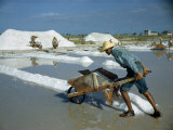 Man Pushes a Wheelbarrow of Salt Evaporated from Sea Water
