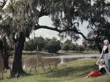Two Women Rest Beneath a Tree  Beside the Bayou Teche Waters