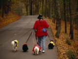 Woman Walks Her Army of Dogs Dressed in Colorful Raincoats